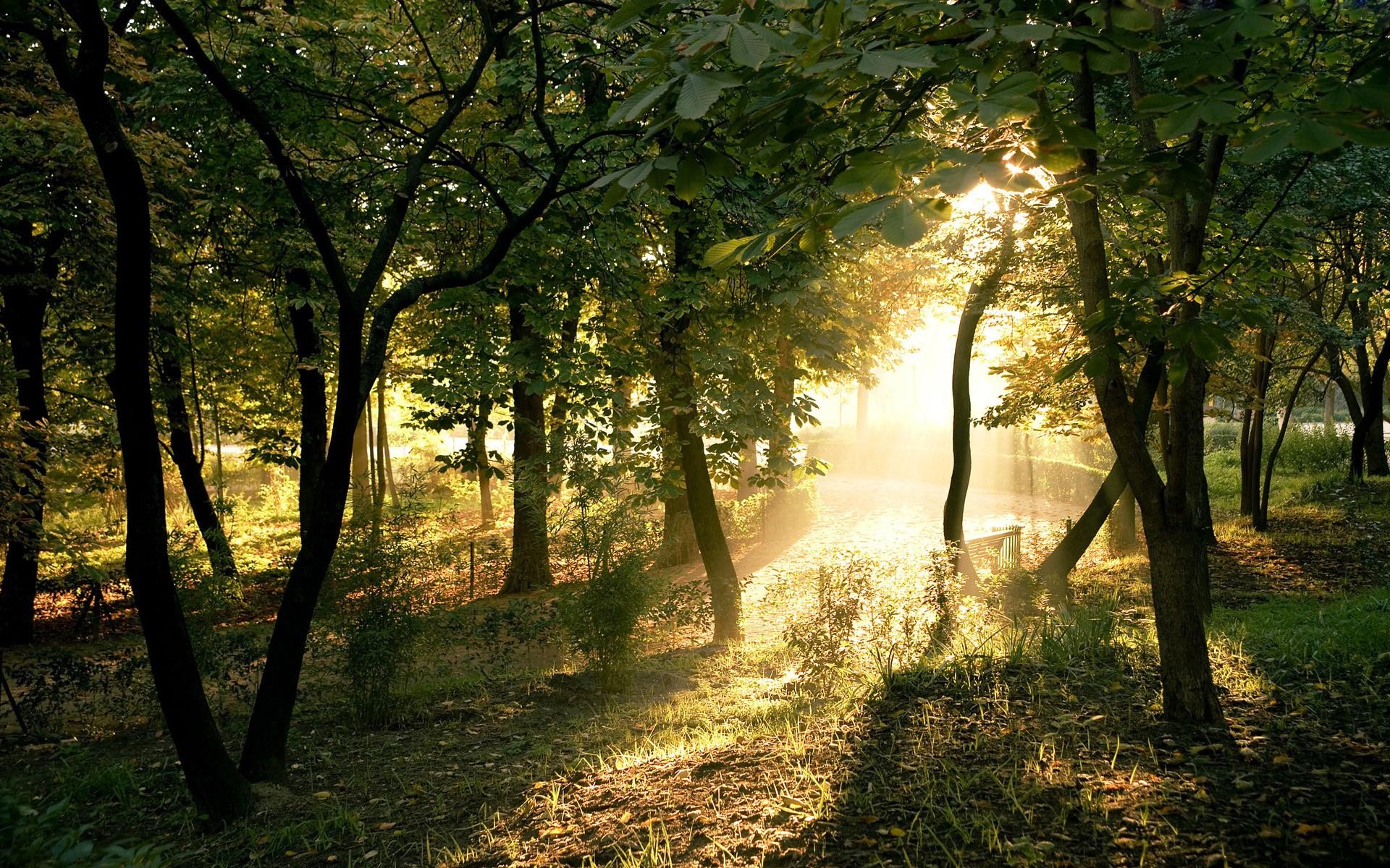 Influenta vegetatiei asupra climei