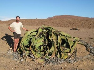 Planta preistorica