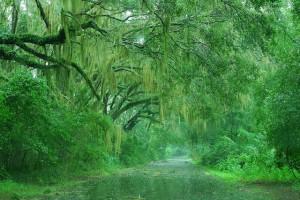 Ploaie in padure